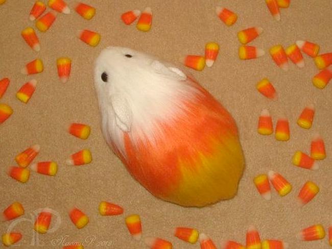 Candy Corn Guinea Pig