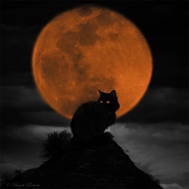 halloween-black-cats - Magali Fréchette