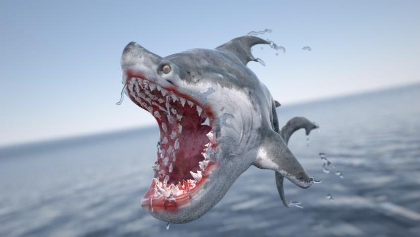 Shark - Arthanshi