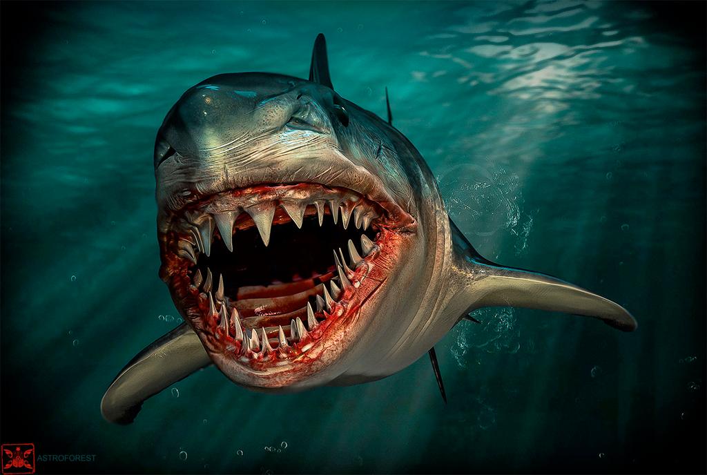 Shark - Astroforest