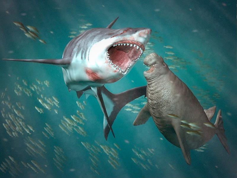 Shark - Ferchezau Mirel