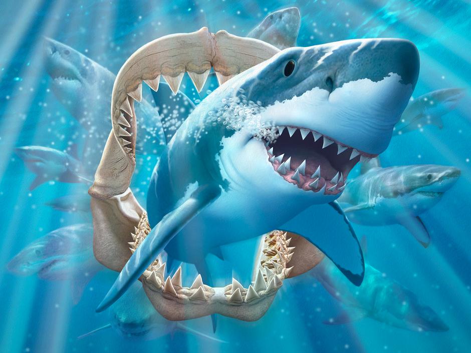 Shark - Jerry LoFaro