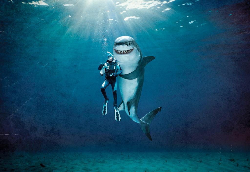 Shark - Rachael Dunk