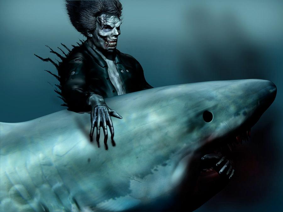 Shark - Travis Molitor