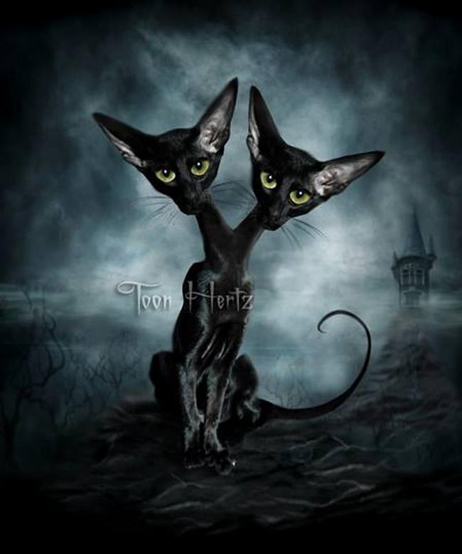 Toon Hertz - Siamese Cats