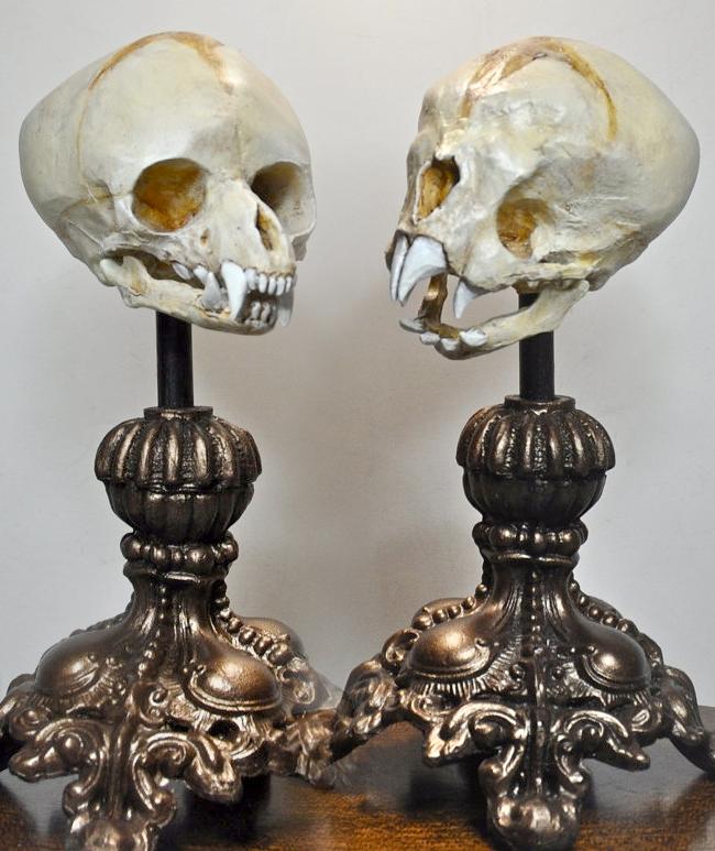 Fetal Werewolf & Nosferatu Skulls