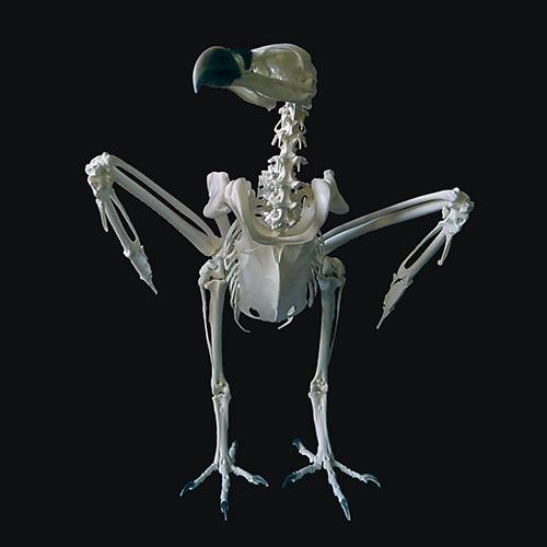 Skull Site